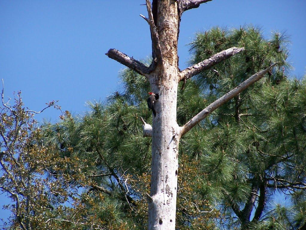caroline pepe birch