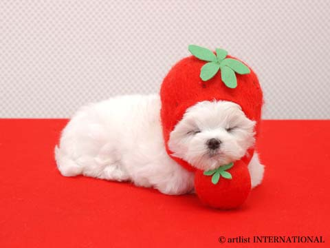 World's Most Cute Puppies Pictures | Cute Little Dogs Pixs Seen On www.coolpicturegallery.us