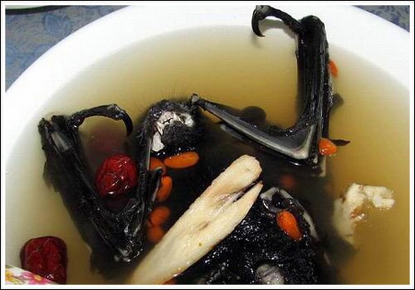 Chinnese Yummy Food Of Bat Soup Images | In These Photos Very Yummy Bat Soup Food Seen On www.coolpicturegallery.us