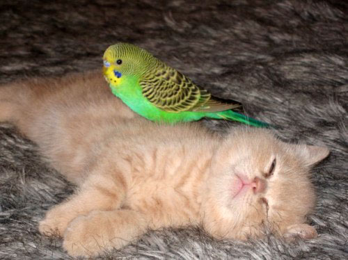 Gattilicious  =^.^= - Pagina 2 Amazing+Friendship+Of+Bird+And+Cat+%25285%2529