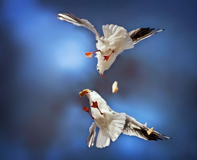 Birds Playing With Himself funny Pictures | Animals Playing With Each Others Seen On www.coolpicturegallery.us