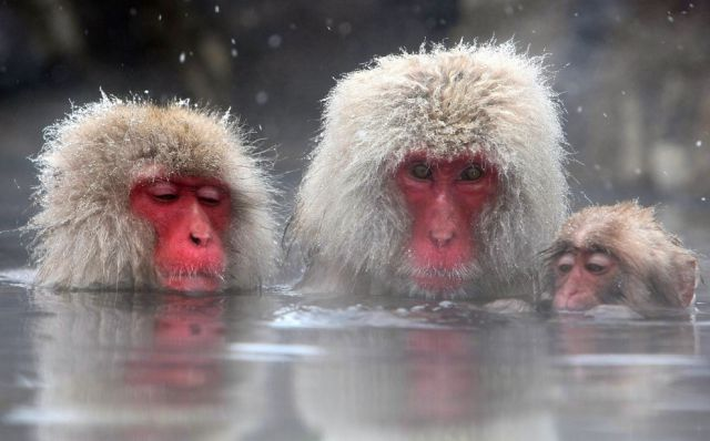 Amazing Bating Monkeys