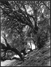 ΤΟ ΔΑΣΟΣ ΤΗΣ ΔΩΔΩΝΗΣ (F. BOISSONNAS 1913)