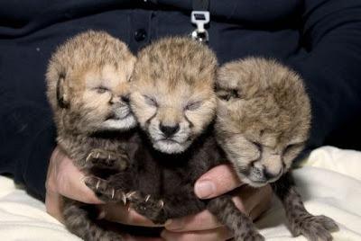 18 - Cutest Animals Pictures