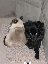 Frankie & Fluffy