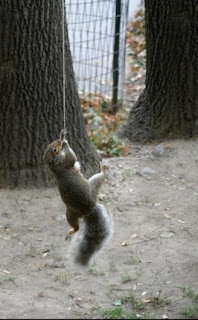 evil squirrel of death