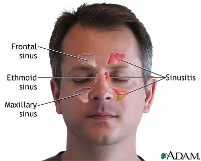 Nasal passage anatomy