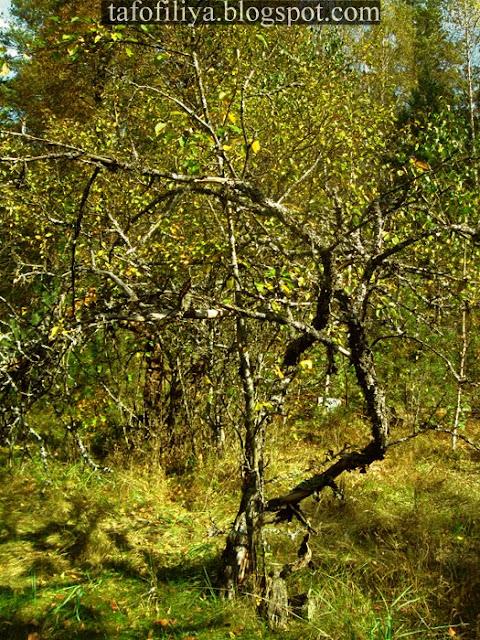 лес, сад, сад в лесу, деревья, природа, заброшенный сад, заброшенный сал в лесу