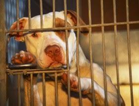 Days To Die Dogs Mean Instant Death