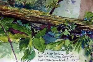 nurse log, Schmitz Preserve Park