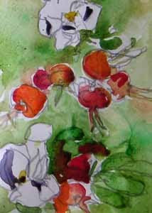 rose hips, watercolor by susan k. miller