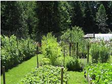 The Veggie Garden