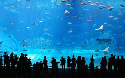 Okinawa aquarium, acquarium, large acquarium shot, Japanese acquariums, inspiration shot
