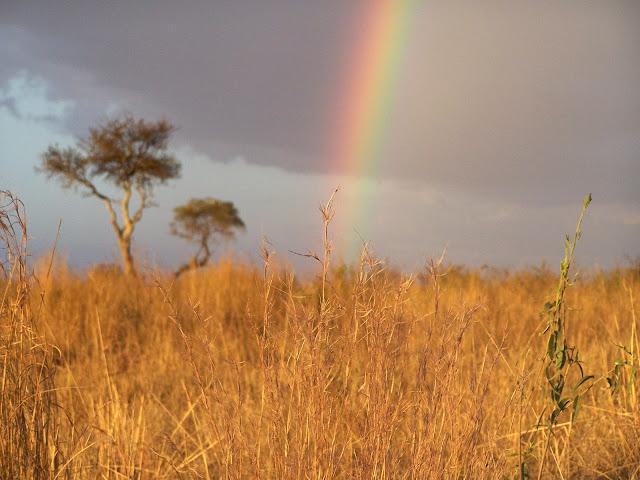 Masai, Masai Mara, Africa, Kenya, Rainbow, African rainbow, Kenyan Rainbow, Kenyan grasslands, Masai landscape