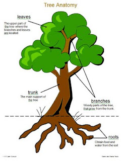 1 - 2 - 3 Learn Curriculum: Tree Anatomy Sheet Added to Fall Fun