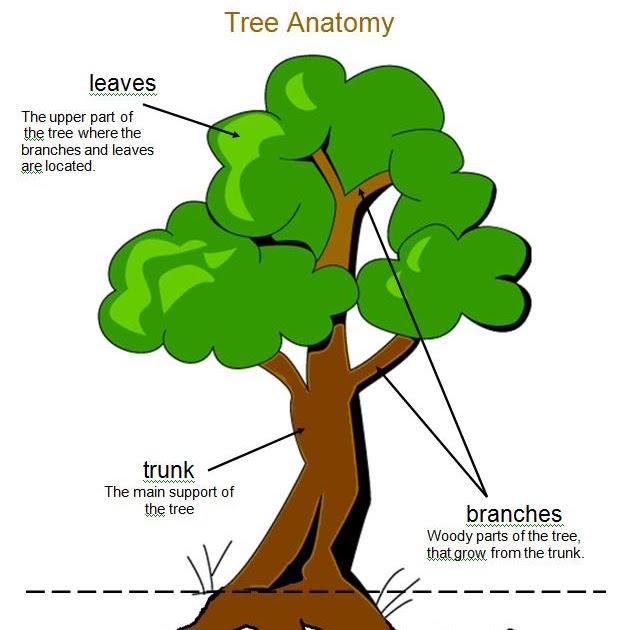 1 - 2 - 3 Learn Curriculum: Tree Anatomy Sheet Added to Fall Fun