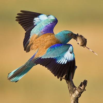 Bird Flight: European ...