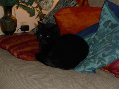 fans de chats noirs un site pour vous tomate joyeuse. Black Bedroom Furniture Sets. Home Design Ideas