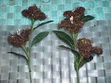 Bunga Tembakau