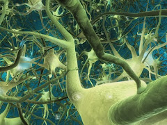 ნეირონი