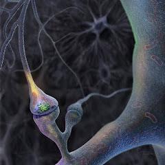 სინაფსი