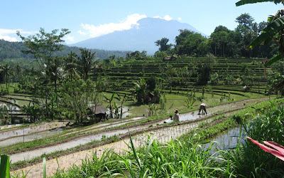 s to a greater extent than attractive countryside tin survive establish inwards the Sideman expanse BALI RICE TERRACES - SIDEMAN