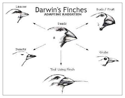 Darwin S Theory Of Natural Selection Bird Lab