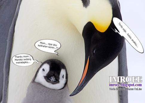 foto lucu dan keren Pinguin