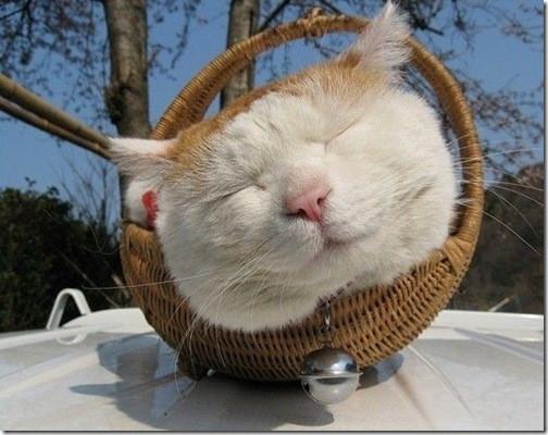 [Image: Kucing+Keren-imut-lucu-menggemaskan-imroee-5.jpg]