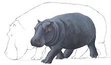 Hippopotamus creutzburgi by Alexos Vlachos