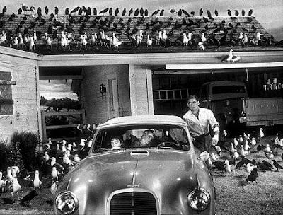 птицы 1963, альфред хичкок, ретро фильмы ужасов