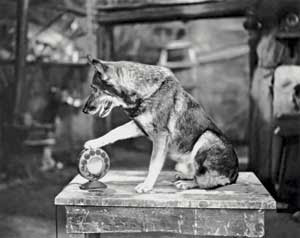 Http Thebark Com Content Shelter Dogs Fate Can Rest What Breed He Labeled