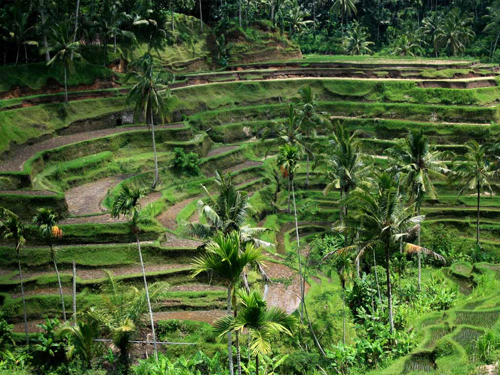 [Bali-field-wallpaper-01-1024.jpg]