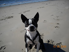 Jacob our Boston Terrier