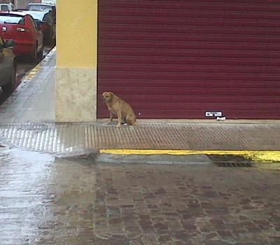 Solo, abandonado, mojado y tiritando de frio, URGENTE!!! Murcia IMG00113-20100213-1258