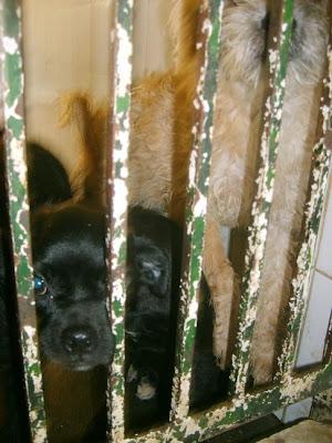 SOS, Perrera de Mairena,, es horrible la cantidad de animales que nos suplican ayuda con sus ojitos S5006908
