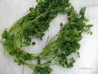 Μυρώνι-Scandix pectin veneris