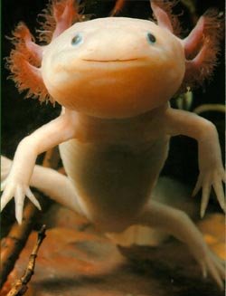 That is just weird most weird looking animals for Dream about fish