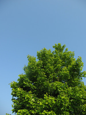 Blue sky and green tree