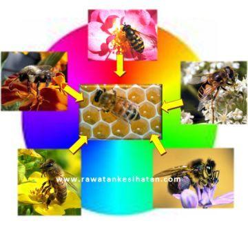 Madu diambil daripada pelbagai jenis bunga yang berlainan warna