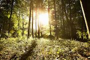 Jesienny las (jesienny las )