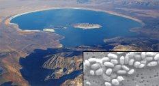 lago-bacteria