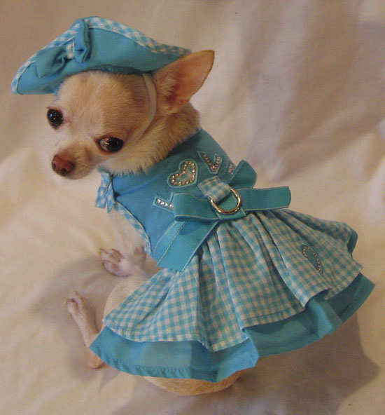 Small Dog Clothes For Sale