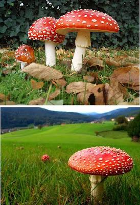 Jamur Paling Aneh di Dunia