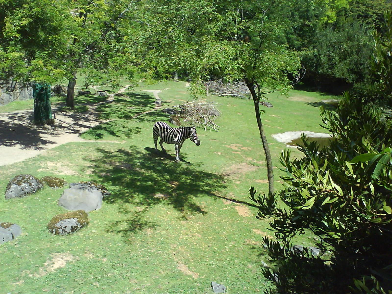 [Zebra]