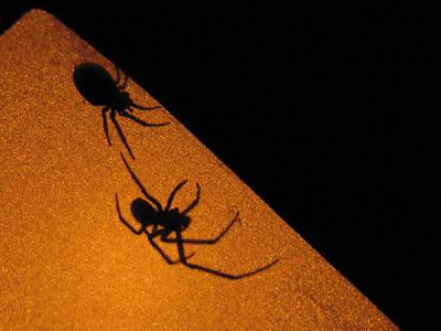 Ombres d'araignées - Leuze-en-Hainaut - Belgique - Anne-Sarine Limpens 2008