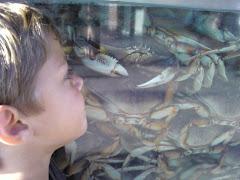 Crab-O-Rama