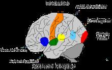 """""""Cerebro y Lenguaje"""""""