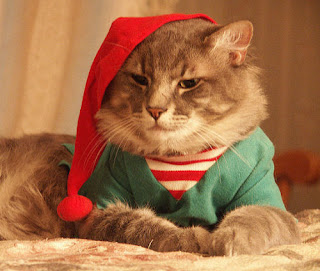 Christmas Cat Desktop Wallpaper