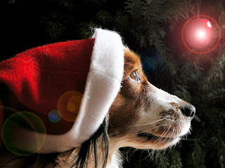 Animal Lovers Christmas Wallpaper